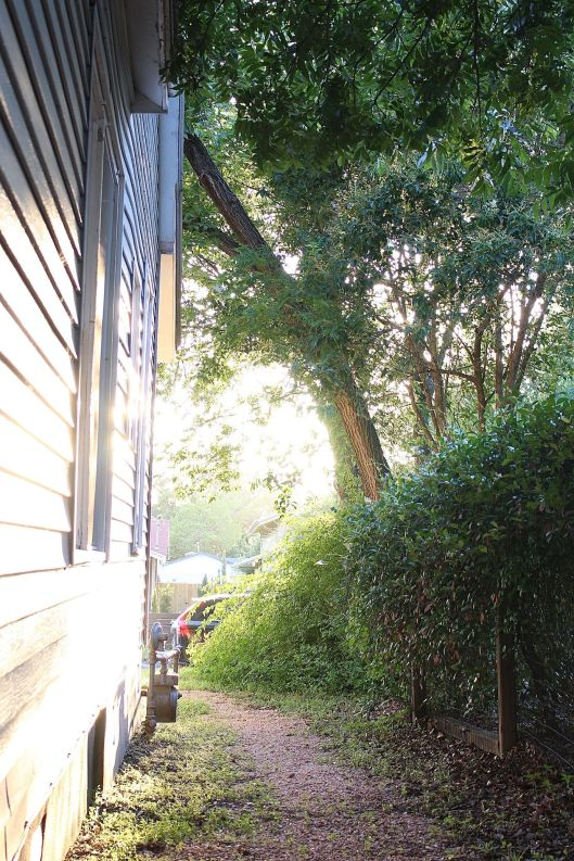North-facing side which I love to capture this time of day...fab light!! Oh that tall tree!
