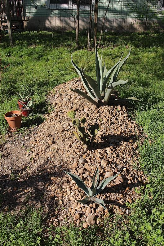 This should hencetotherefore be called 'the succulent grave.' A body under there maybe?? I would never tell....mmwwwwwaaahhhhhaaaaaa :)