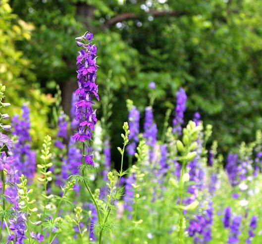 Just to end this post on a high note...this is my friend's Larkspur PATCH...and it's magnificent  :)